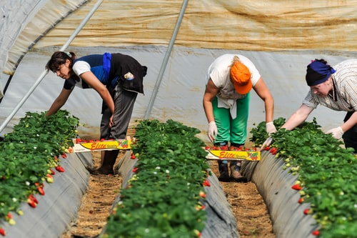 Quality of seasonal migrant workers' accommodation vital in attracting and retaining labour