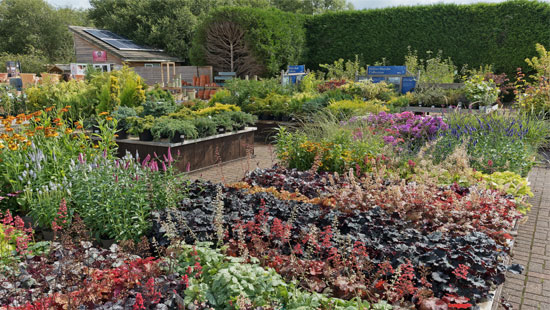Hillier garden centre